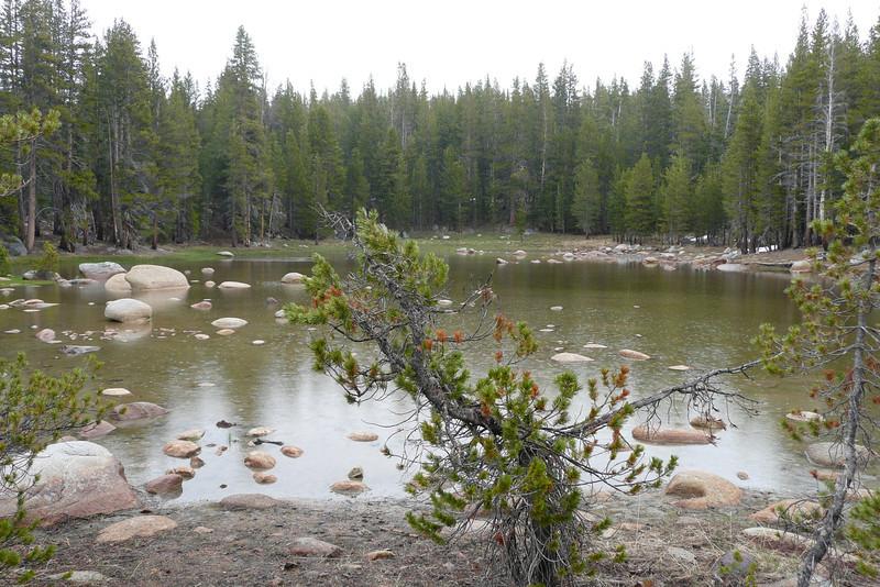 Toulumne Meadows, Yosemite NP