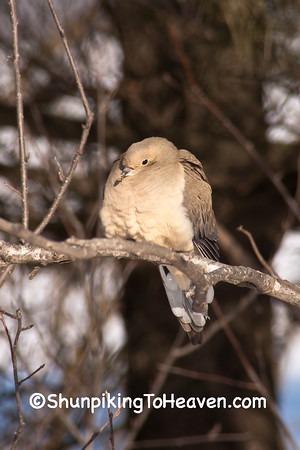 Open Country Birds