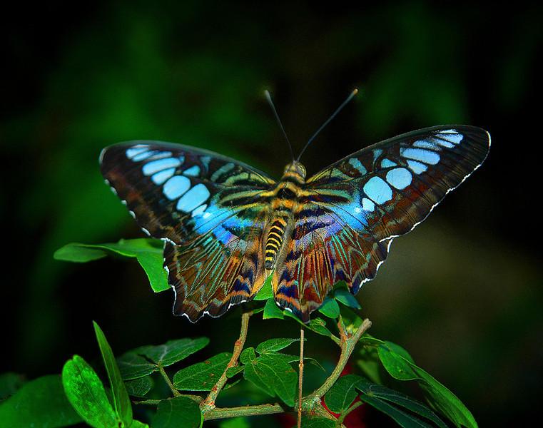 Nature's Jewel  11025 Nature  J Roper  l.jpg