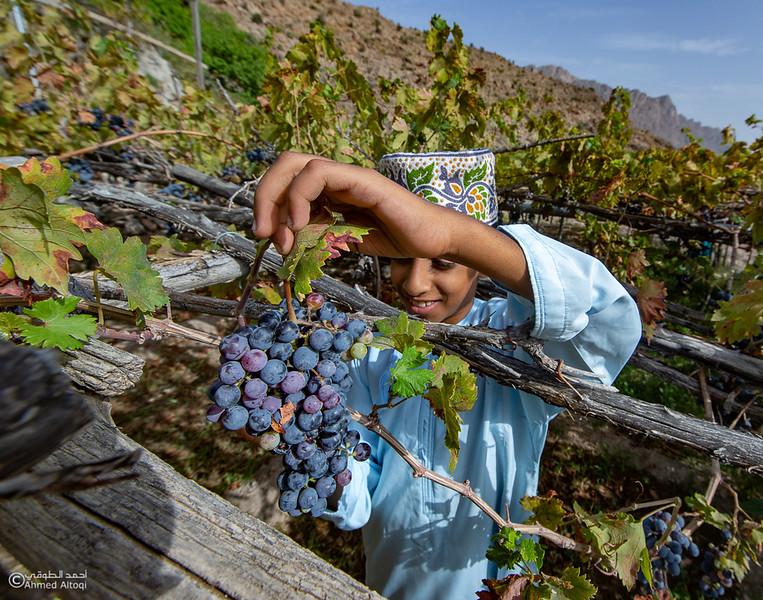 Grape - Wakan village - Nakhal224- Oman.jpg