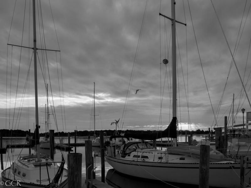 Sunset Gull B&W (1 of 1).jpg