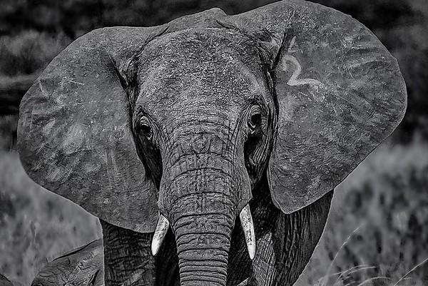 elephants and more elephants