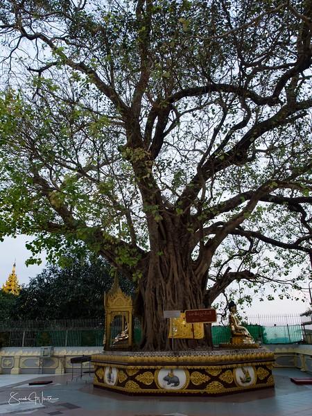 Yangon_181115_092.jpg