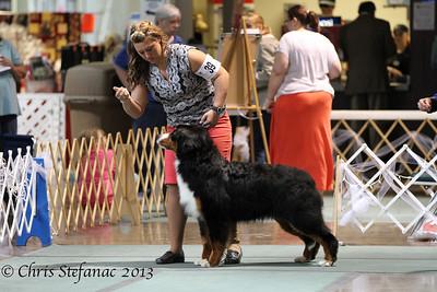 9-12 Puppy Dog BMDCA 2013