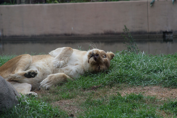 Houston Zoo 2/14/2009