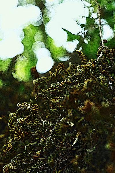20110403_delaNuez_3426_P.jpg
