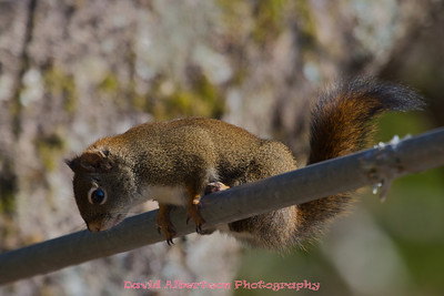 spring humming birds and squirels