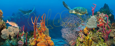Underwater Classics
