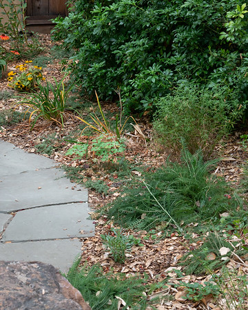 "19 October 2017.  The ""wrap around"" area east of the Patio.  Two new plants: a volunteer columbine and one of the three Penstemon 'Margarita BOP'."