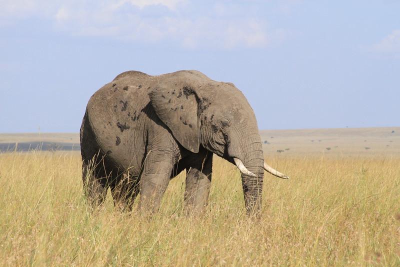 Kenya Part2 '15 035.JPG