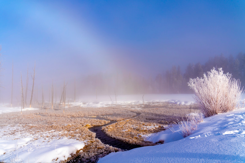 _AR71407 Fogbow & frost bush.jpg