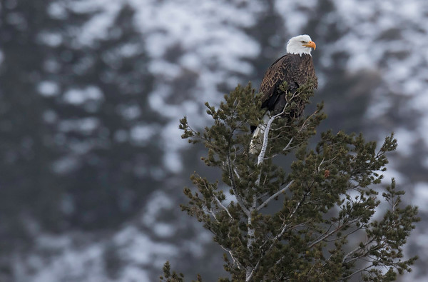 Raptors - Eagles and Hawks