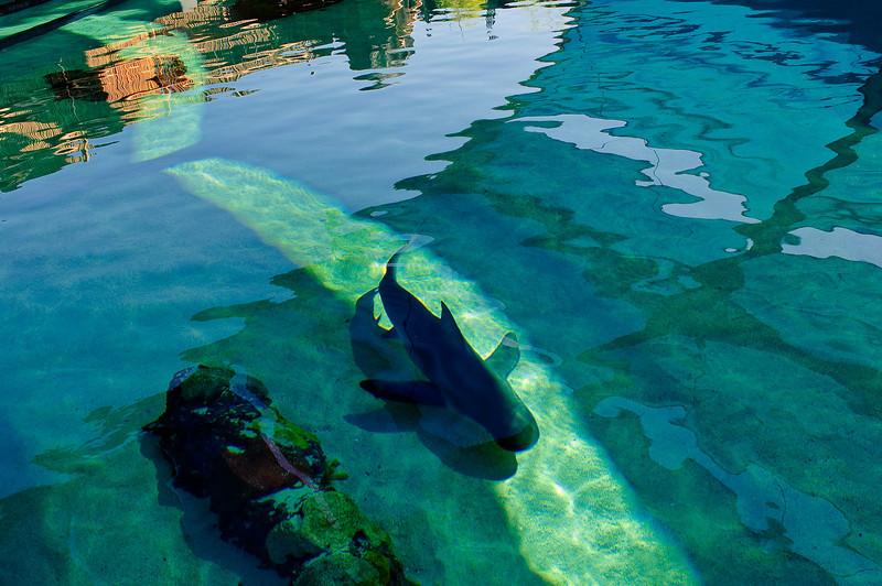 LB-Aquarium-II_11.jpg