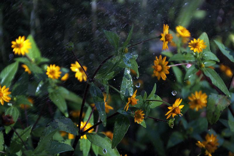 Slow rain