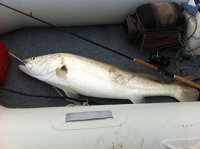 Carnarvon Fishing