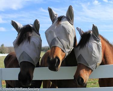 Happy Herds