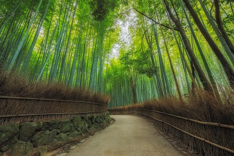 Kyoto Bamboo.jpg