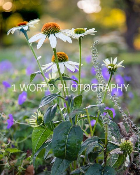 202110182021_10_18 Morton Arboretum077--Edit-1.jpg