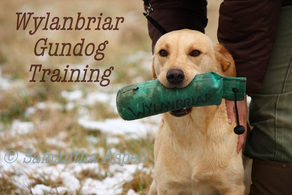 Wylanbriar Gundog Training 15th Jan 2013