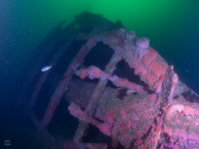Olympic Wreck, Palos Verdes-Hawthorne Reef 01/28/2018 (Giant Stride)