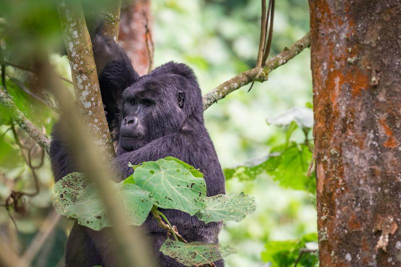 Uganda_T_Gor-2442.jpg