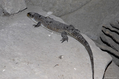 Reptile Park, Bali