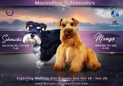 Mango & Schnucks Puppy,  DOB 11/25/2020