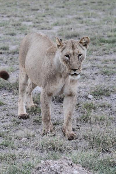 Kenya 2019 #2 1862.JPG