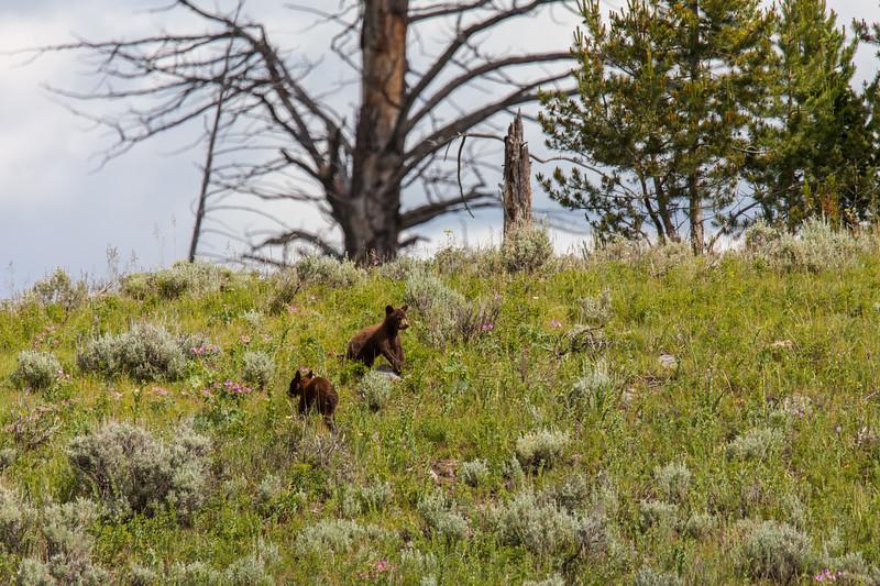 Yellowstone Misc-113.jpg
