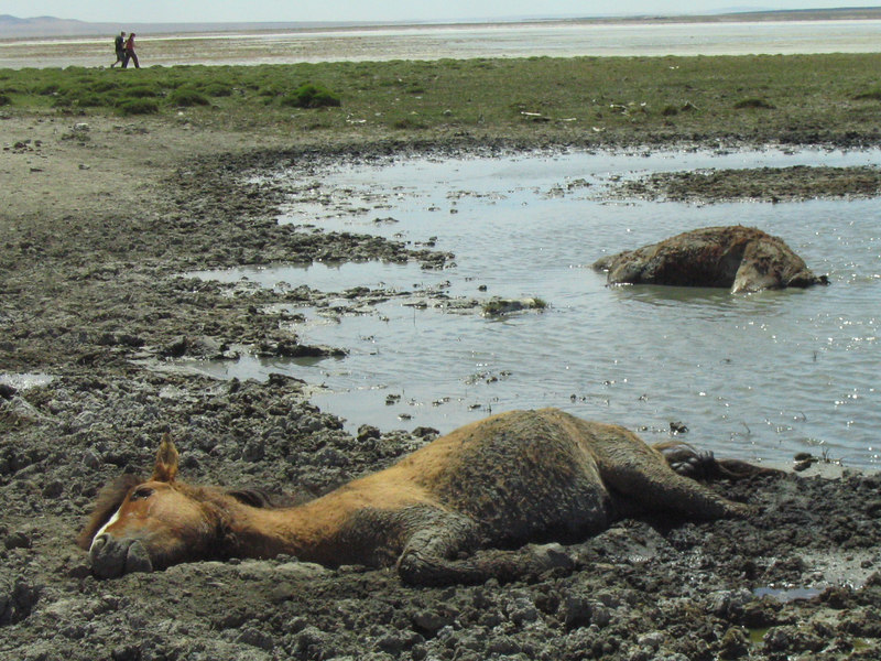 Dying Horse.  Very sad.  You can see it breathing a little bit.  And it's lying in a pile of poop.