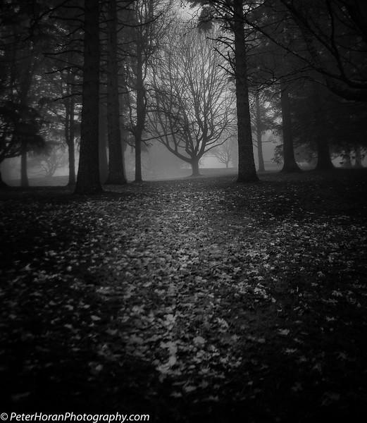 Ghost Trees (300 of 1).jpg