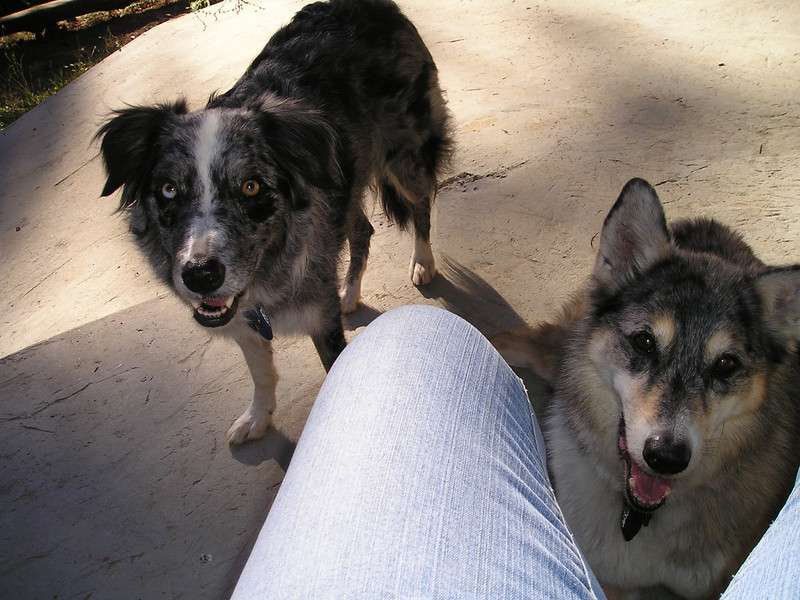 Boost and Tika discover that I am snacking on tasty-smelling multigrain crackers and tofu dip. My dogs don't beg, oh no.