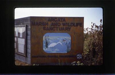 Arcata Wetlands