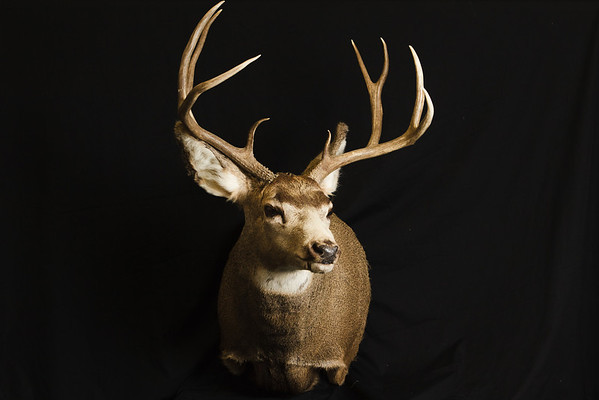 Bob Dorta Taxidermy
