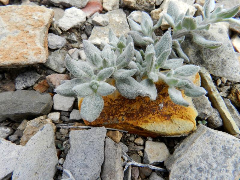 terlingua ranch 113 orage rock and plant.jpg