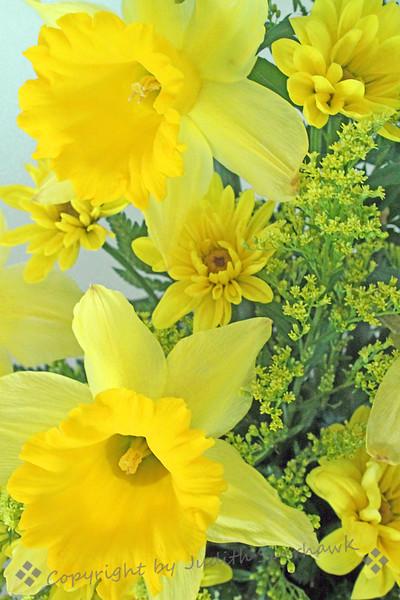 Daffodil Bouquet ~