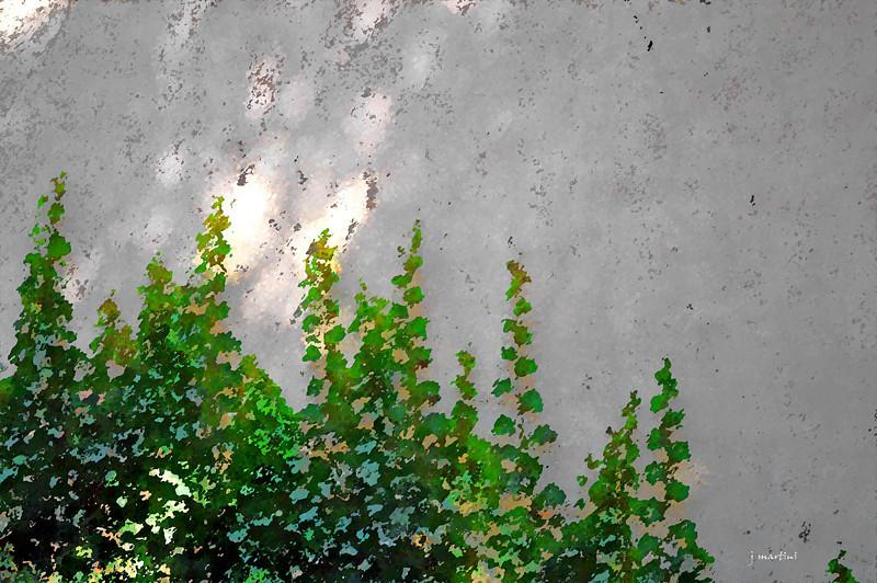 wall vines 2-11-2011.jpg