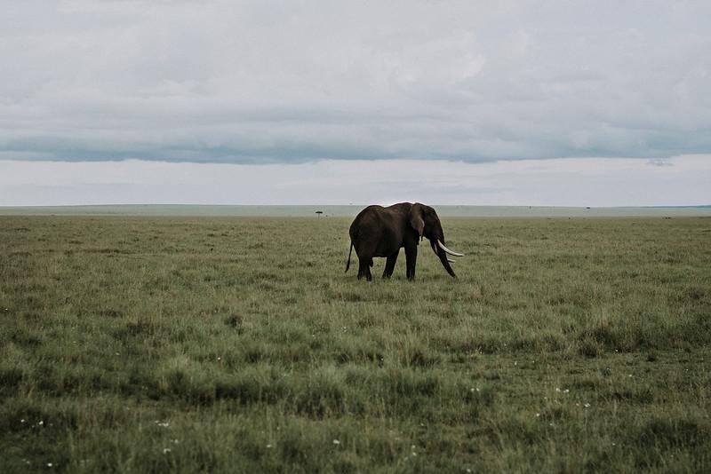 Tu-Nguyen-Destination-Wedding-Photographer-Kenya-Masai-Mara-Elopement-Doris-Sam-177.jpg