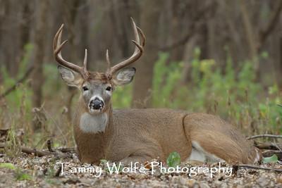 Deer, Elk and Moose
