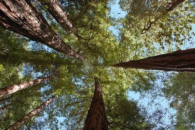 Muir Woods, Monterey Bay & Carmel