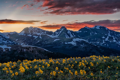 Wildflowers and the Citadel peak from the Loveland Pass Summit, Colorado