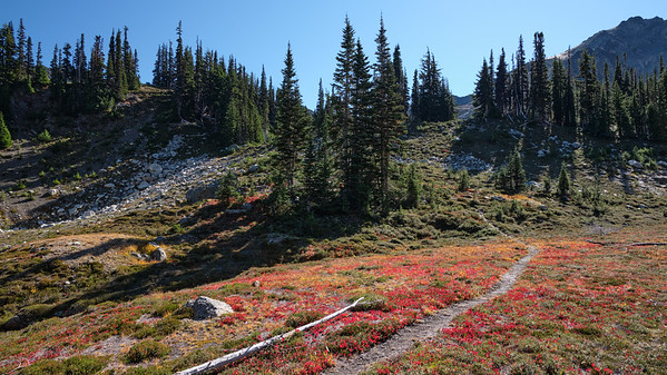 Carpet of red along the trail
