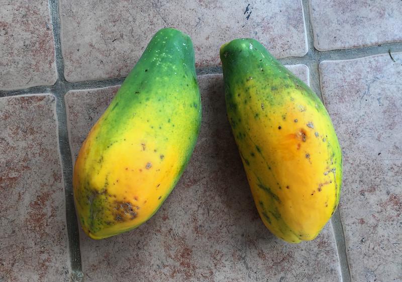Compost Papaya
