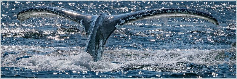 SR3_5397 Whale tail pano LPN W.jpg