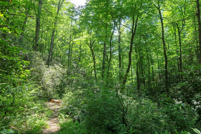 Bradley Creek Trail -- 2,500'