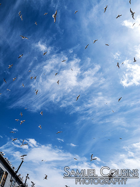 Gulls circling overhead on the wharfs.