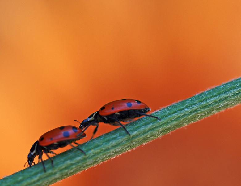 lady bug 3.jpg