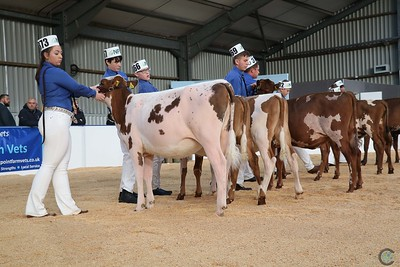 All Breeds All Britain Colored Breed Calf Show 2018