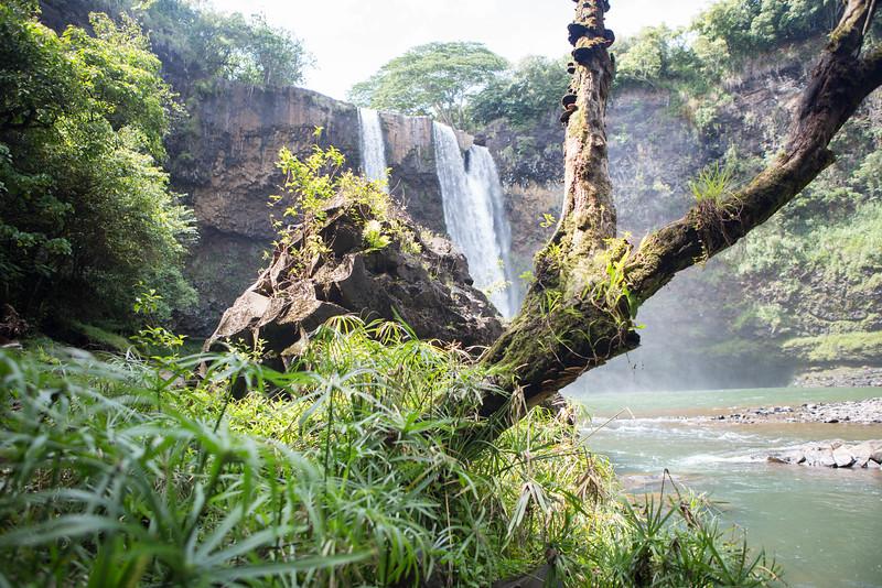 kauai landscape photography-1-15.jpg