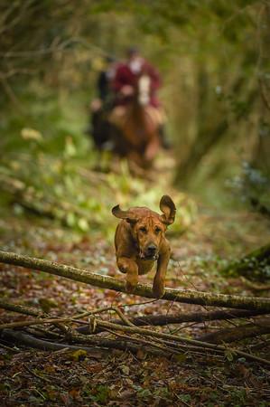 Three Counties Bloodhounds, Alltyferin Estate Meet 2017